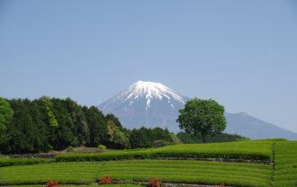 笹場からの富士山